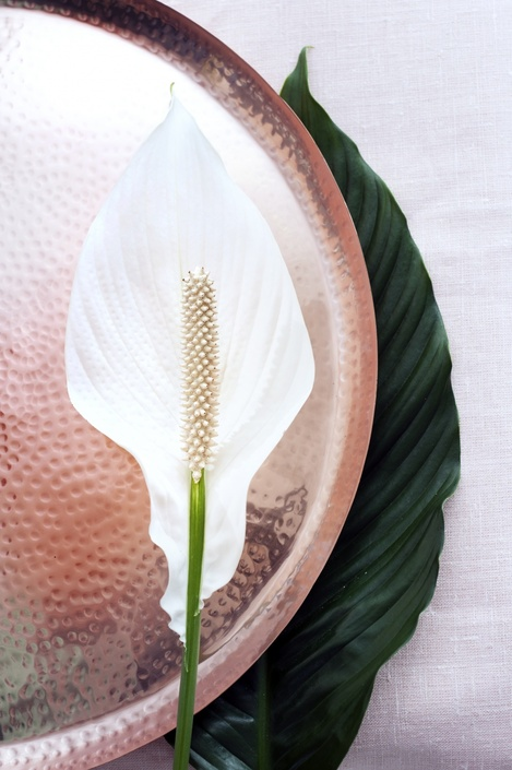 06.spathiphyllum.7