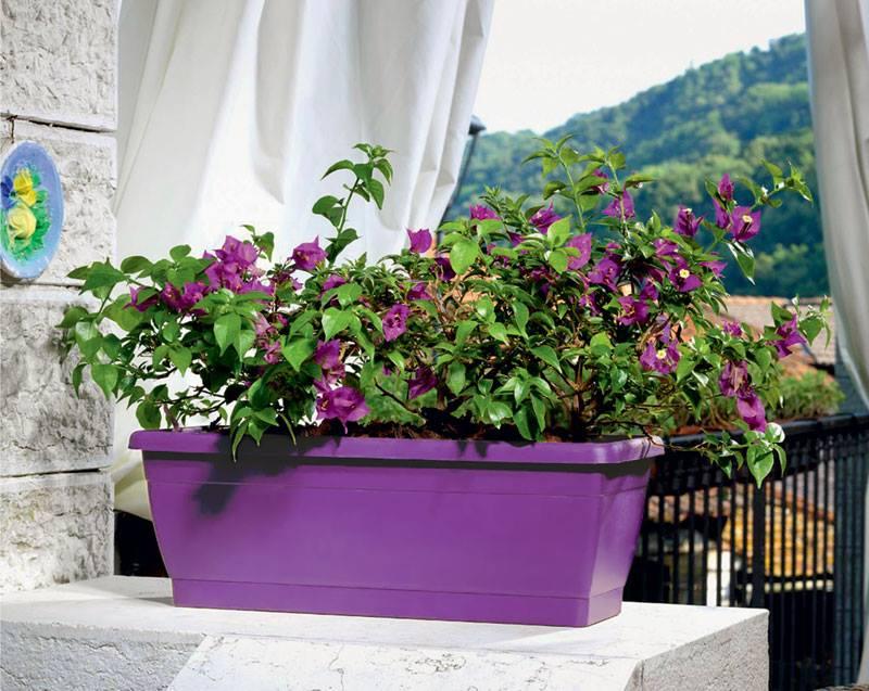 Zet de bloemetjes buiten en de planten natuurlijk ook lifestyle wonen - Buiten zenplanten ...
